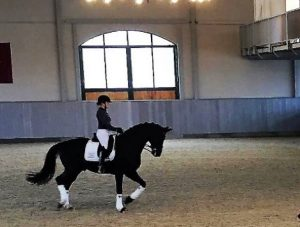 Dale-Dressage-Sitting-Correctly-2