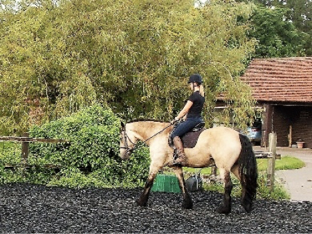 Correct Basics for the Young Horse